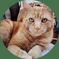 Cat Sitting Pet Services