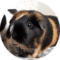 Small Animal Care Pet Services