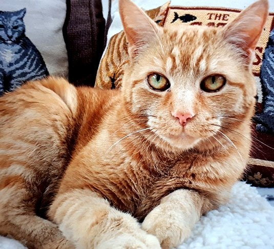 Cat Sitting Norwich